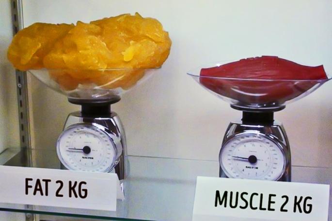 gordura-versus-musculo-1